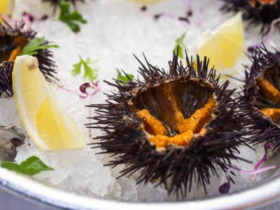 Urchins on dinner plate